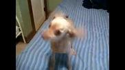 с това куче и да ти се е реве ще се смееш Vbox7