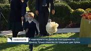 В навечерието на Деня на благодарността Доналд Тръмп помилва по традиция две пуйки