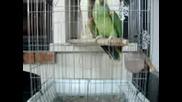 !!! Говорещ папагал - хубавицеее !!!!
