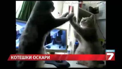 """Раздадоха котешките """" Оскар """"-и"""