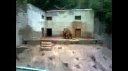 мечешка любов в зоопарк Ловеч 1част