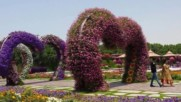 Hd - Most Beautiful And Biggest Natural Flower Garden In The World - Dubai Miracle Gardens
