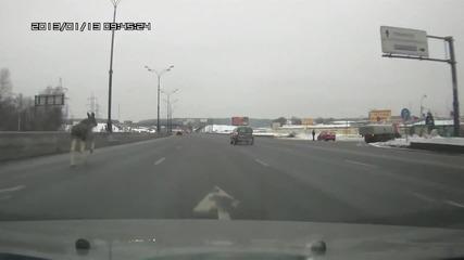 Виждали ли сте лос на магистрала?