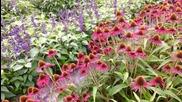 Летни цветя и пеперуди - Buterfly-авторски