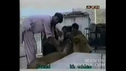 Ужасяващи Кадри.Лъв Захапва Ръката На Мъж