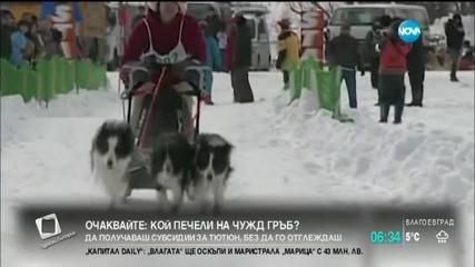 Състезание с кучешки впрягове в Хокайдо