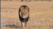 Jeff Corwin on Cecil the Lion: 'We Need to Learn From This'