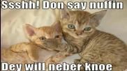Много смешни котки ;d