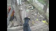 Лудо Куче Върши Нередности Тайно От Другарчетата си