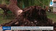 Мощни тайфуни удариха Япония и Северна Корея