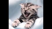 от котки до тигри, от смешни до страшни