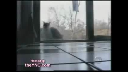 The Best Cat Video You Ll Ever See