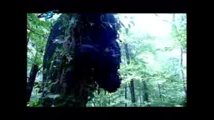 Ахат  -  Дървото