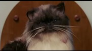 Котка разтоварва самосвала :d