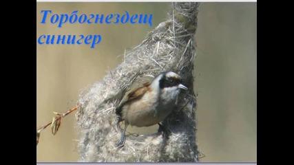 Красиви птици