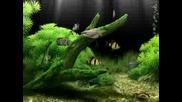 Dream Aquarium - screensaver