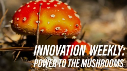 Can mushrooms be our new energy solution?