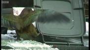 Най - умният папагал - Кеа...