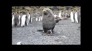Тюлен и пингвин се натискат