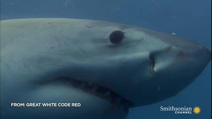 Окото на акулата..