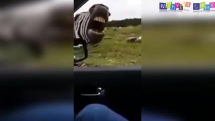 Смях и яки гафове - Минутка изцепки