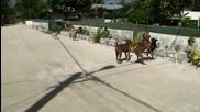 Trip to Manihi in Tahiti