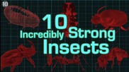 10 Невероятно силни насекоми...