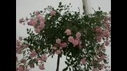 Флора Бургас - 2008