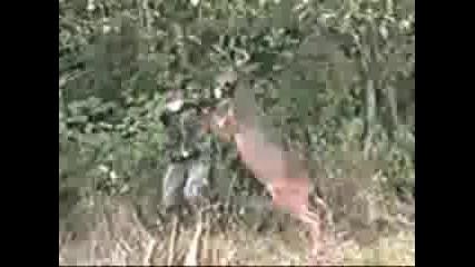 Разярен елен напада ловец