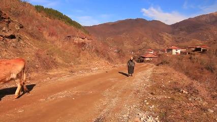Пасторална идилия в село Голешово