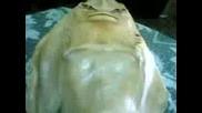 Morska nimfa
