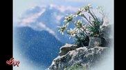 Еделвайс в планините на България...(music Andre Rieu)...