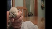 Най-сладкото коте - Ще ви разтопи