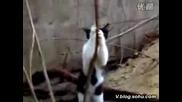 Котка която ще ви скъса от смях