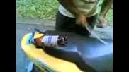 Baraban - Motor