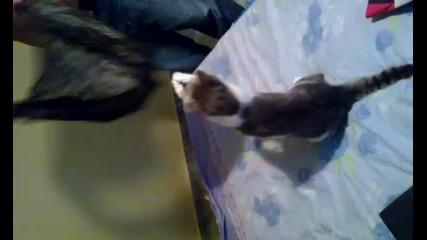 Котка обича да скача в плик