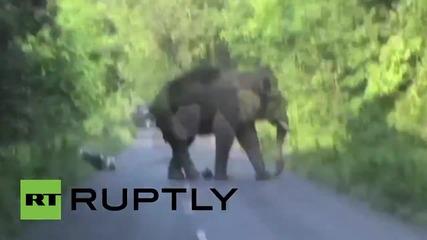Индия: Мотоциклетист едва избягва сблъсък със слон