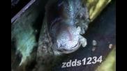 Много странно животно обитава каналите !