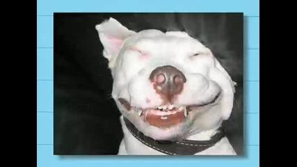Смесхни снимки на кучета