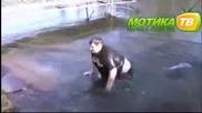 Маняк Скача В Заледено Езеро И Се Пребива Много Ама Много Смях