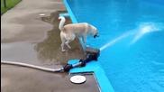 Моето куче не е най умното- се опитва да ухапе водна струя (смях