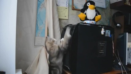 Забавни Котки ! Смях