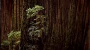 Гласът на природата – Робърт Редфорд е секвоята - Conservation International