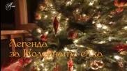 Легенда За Коледната Елха