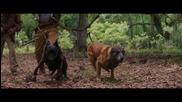 Sarafa & Shosho - DJANGO ft. Andre