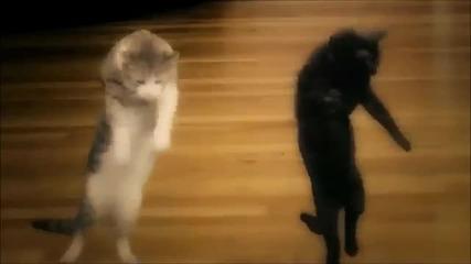 Harlem Shake с животни !