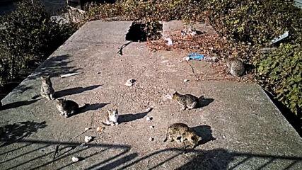 Котешко събрание