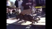 Pit Bull Weight pull 2