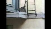 Котка Паяк (spidercat)