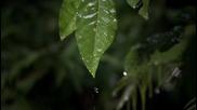 Бразилският гекон